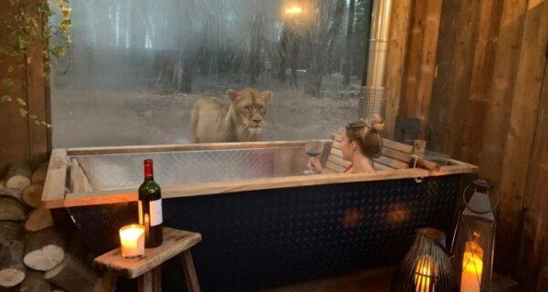 Дикая ночка: в Кенте открылся потрясающий отель, где можно отдохнуть по соседству со львами