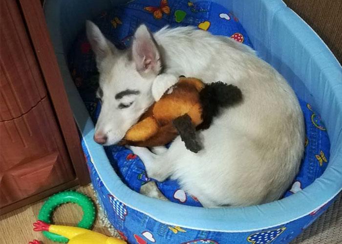 Бездомный щенок с бровями, которые считали нарисованными, обрел дом в Братске