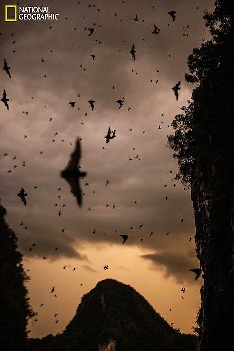 В Оленьей пещере на острове Борнео обитает более двух миллионов летучих мышей нескольких видов