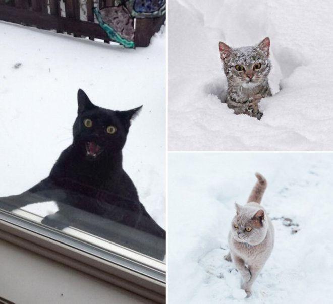 Реакция кошек на первый снег