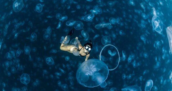 Прогулки под водой: бесстрашные фридайверы в окружении тысячмедуз
