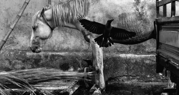 Темные тела: мрачные истории на лучших черно-белых снимках со всегомира