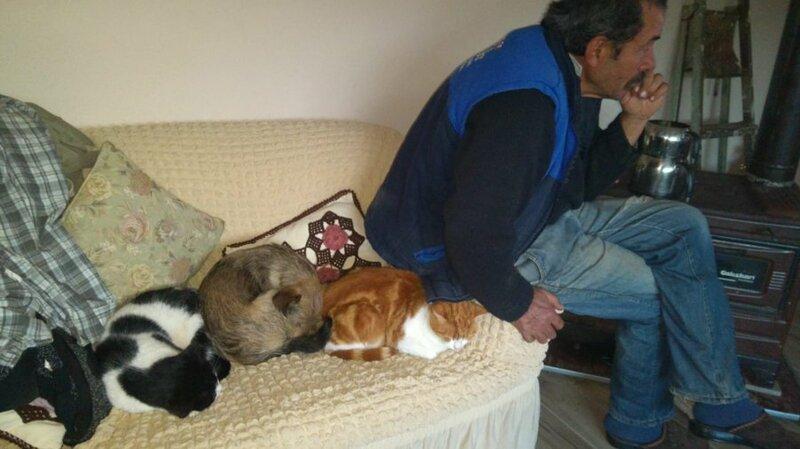 родители и кошки