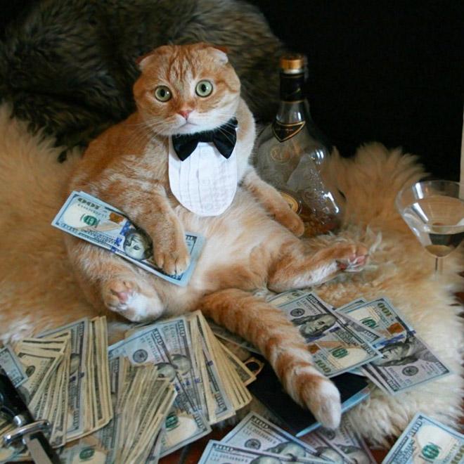 картинки животные гони деньги главного