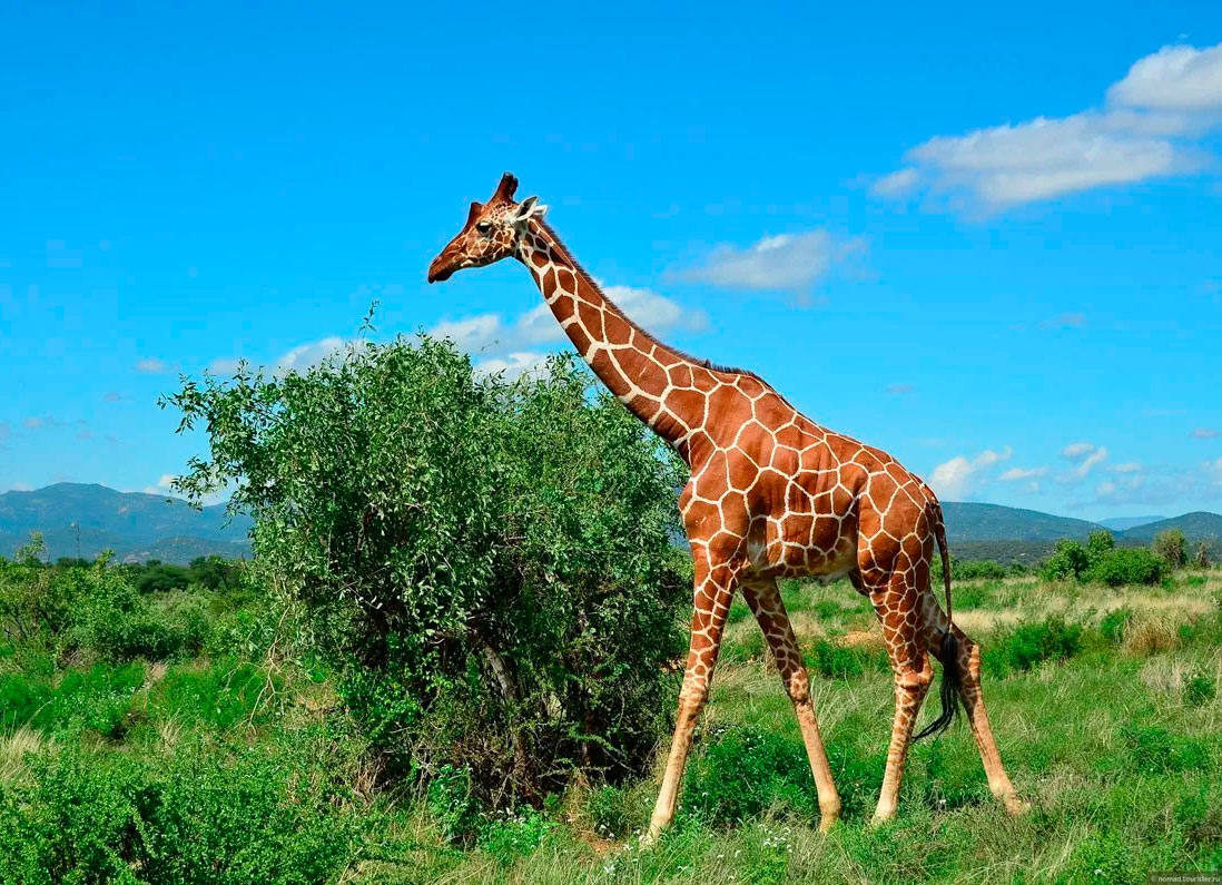 фотки и картинки жирафа дом вполне