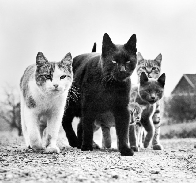 Уолтер Чандоха и кошки