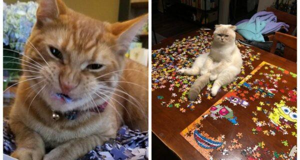 20 доказательств того, что коты и пазлы несовместимы