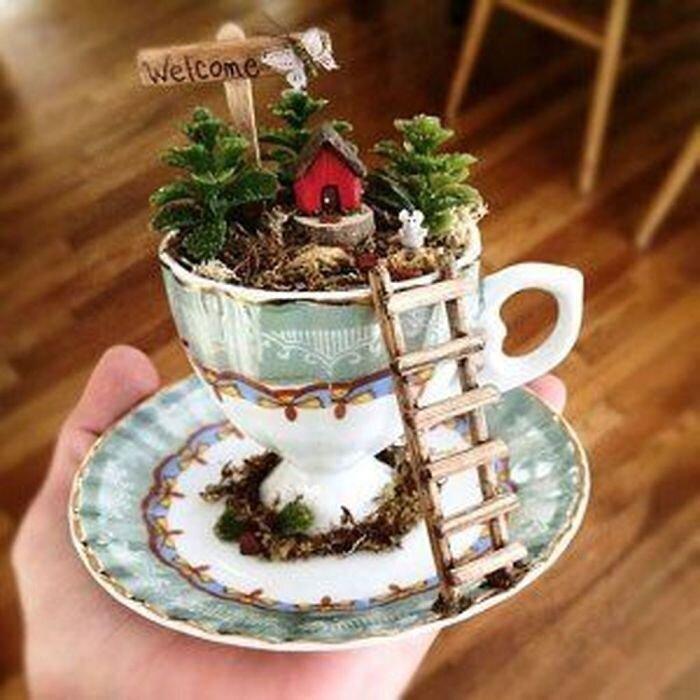 сад в чайной чашке