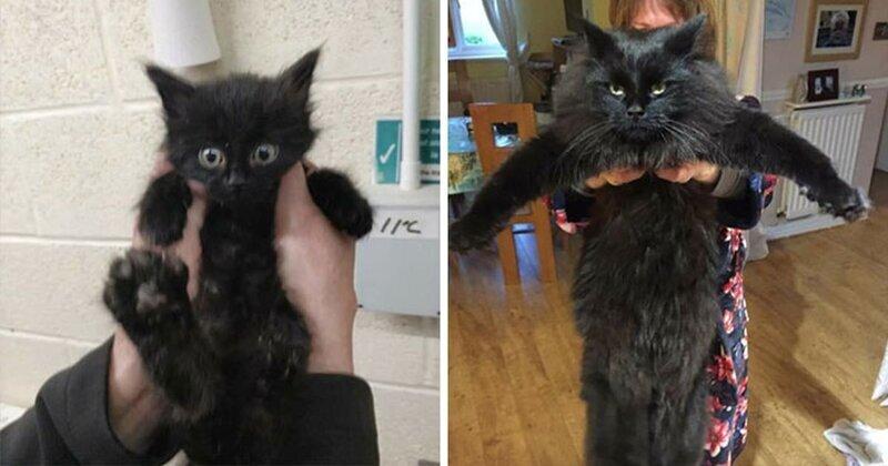 25 фотографий кошек до и после того, как их подобрали с улицы фото