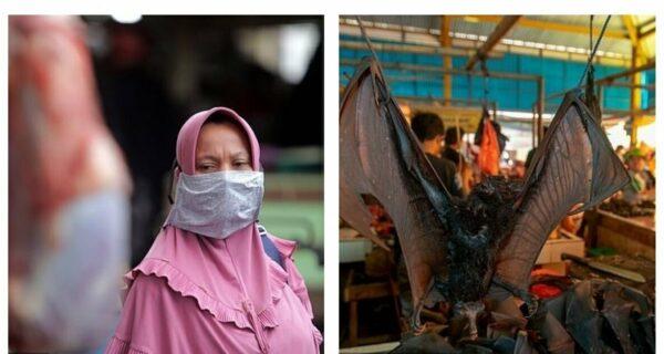 Дикое мясо: в Индонезии нашли рынок с летучими мышами и крысами