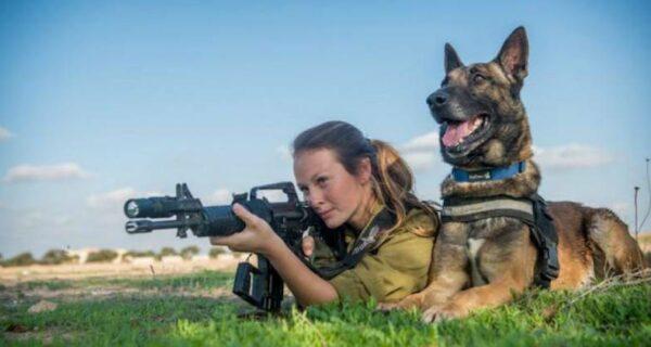 Что такое «Окец», или Как собаки служат в израильской армии