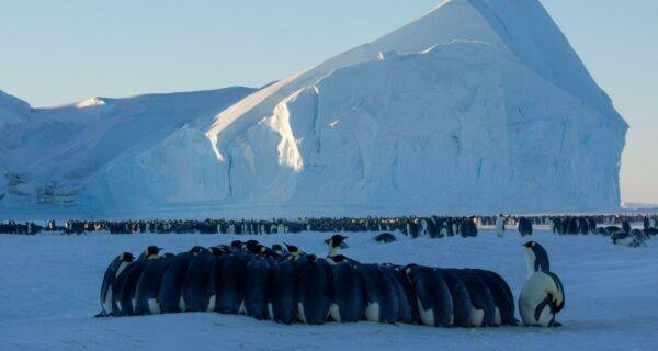 Подробная инструкция: как попасть в полярную экспедицию в Антарктиду