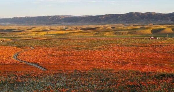 В Калифорнии после долгой засухи зацвели маки и их видно даже из космоса