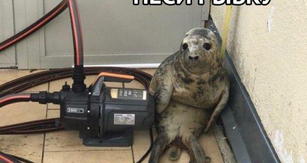 Как в Питере детеныш тюленя пытался сбежать и сталмемом