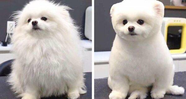 12 случаев, когда не узнаешь свою собаку после стрижки