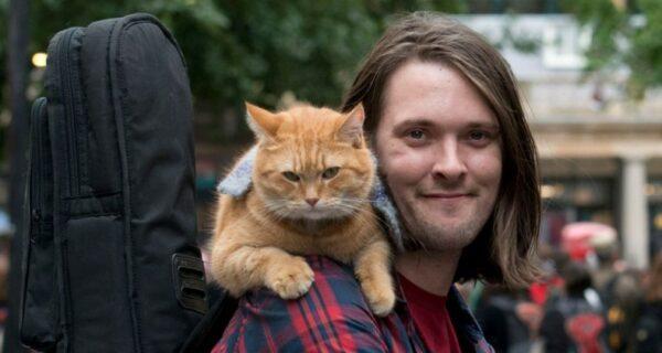 В Лондоне умер герой книг-бестселлеров рыжий уличный котБоб