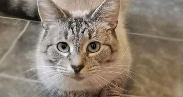 Британский кот пришел домой с посланием, которое заставило его хозяина переживать