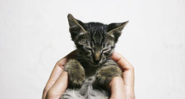 Месяц помощи животным