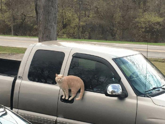 коты и кошки, которые плевать хотели на законы физики