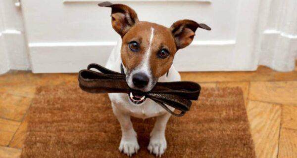Гулять минимум два часа: «Собачий акт» в Германии ужесточит правила для владельцев собак