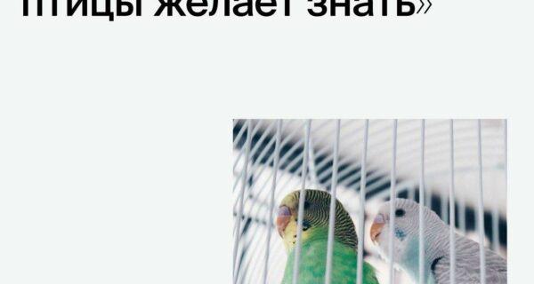 Каждый хозяин птицы желает знать…