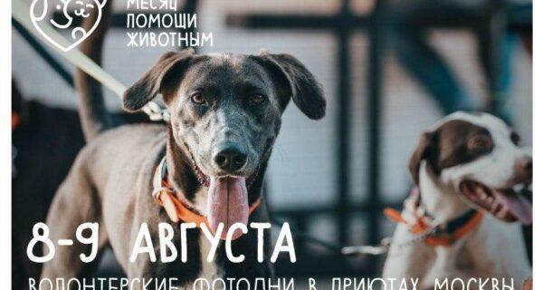 8 и 9 августа московских приютах для животных пройдут волонтерские «фотодни»