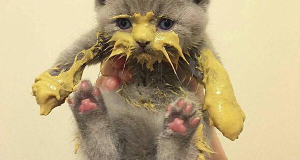 Кушайте, не обляпайтесь: 20 милейших котяток, которые не умеют есть аккуратно