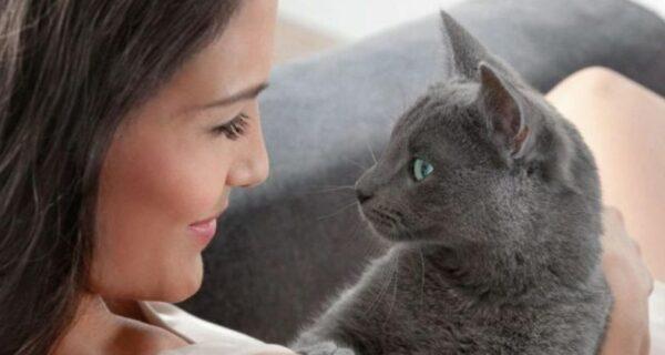 Ученые рассказали о секретном способе наладить контакт с кошкой