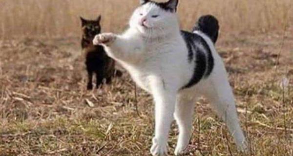 22 котика, в которых внезапно проснулся охотничий инстинкт, но они забыли как это делается