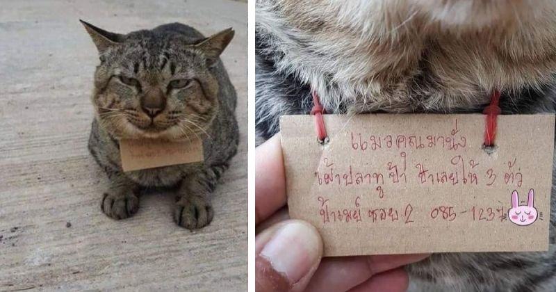 Пропавший домашний кот вернулся к хозяину с долгами