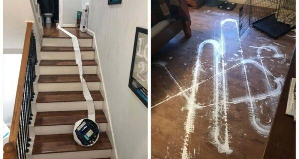 25 доказательств того, что роботы-пылесосы — те еще проказники