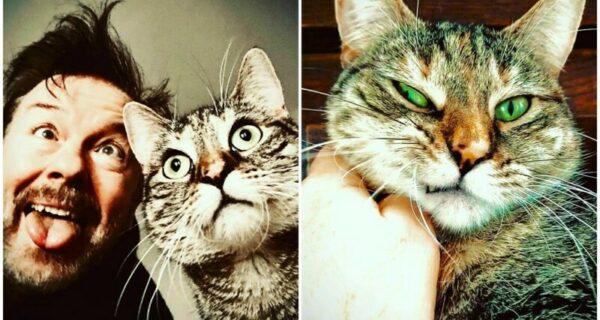 Актер Рики Джервейс думал взять кошку на передержку, но та изменила егопланы