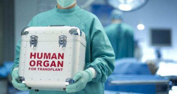 Человек на запчасти: сколько стоит наш организм, разобранный на донорские органы