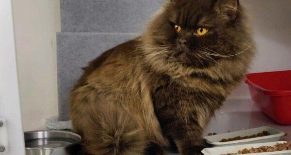 На побережье Британии нашли кота из России, который преодолел более 3 000км