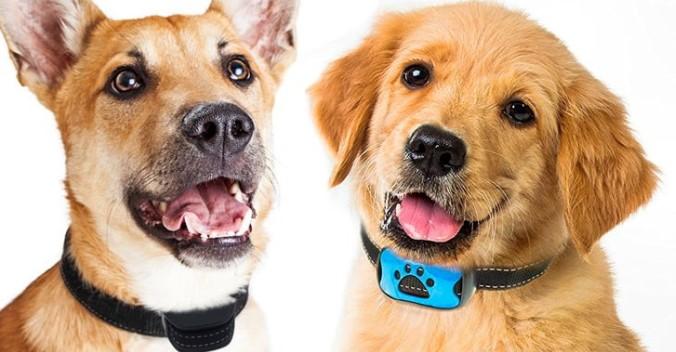 интернет-магазин электронных ошейников для собак