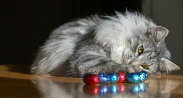 Одесская кошка пересекла два моря в контейнере, питаясь конфетами