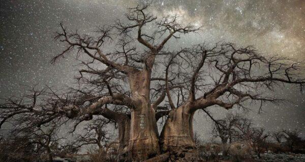 «Алмазные ночи» фотографа Бет Мун — старые деревья под звездным небом