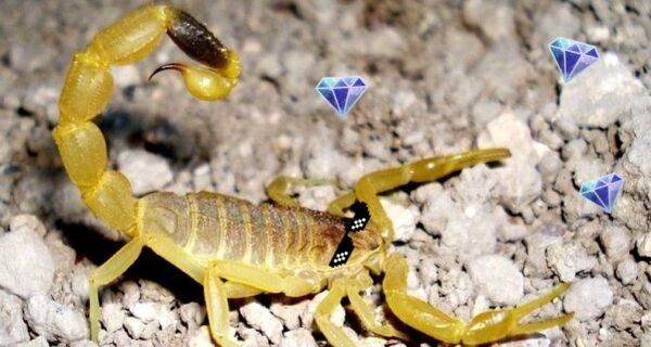 Самая дорогая жидкость в мире: яд желтого скорпиона за 760 миллионов рублей