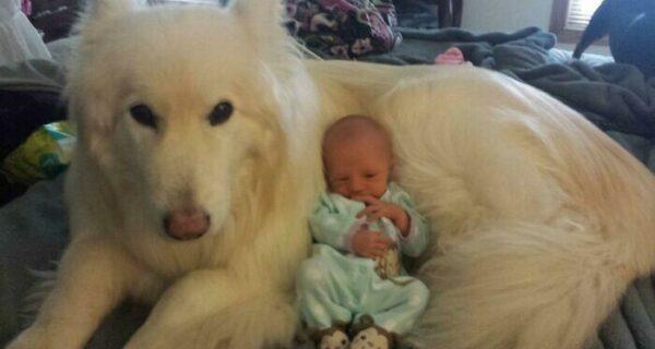 35 трогательных доказательств того, что собака — лучший друг для ребенка