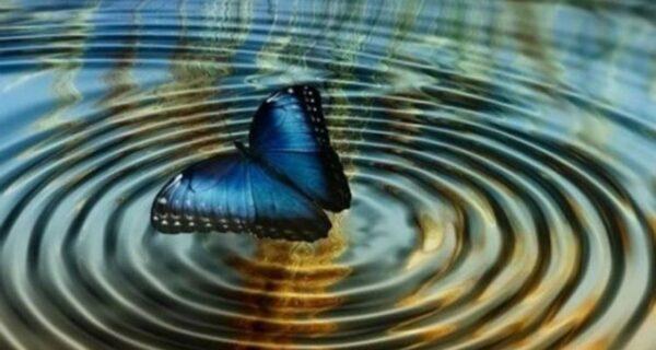10 примеров «эффекта бабочки», которые полностью изменили мир