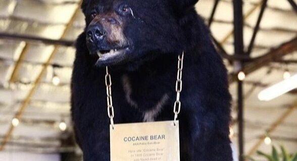 Удивительная история Кокаинового Мишки — медведя, который съел 34 кило контрабандного кокаина
