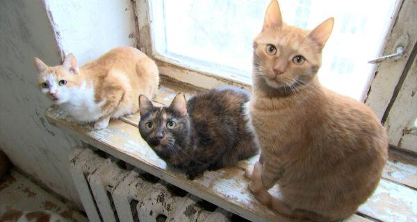 Москвичка получила в наследство от бабушки 70 кошек и теперь ищет имдом
