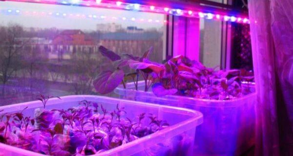Что скрывается за фиолетовыми окнами, или Крах еще одной теория заговора