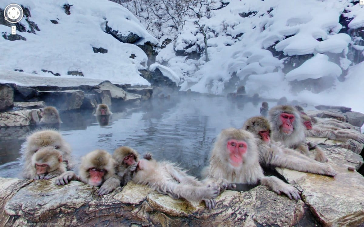 Bigpicture ru heres one in which a bunch of monkeys are hanging out