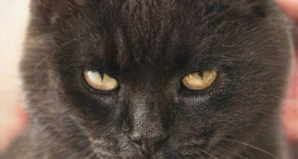 Этой кошки не существует! Нейросети создают фото фейковых котиков