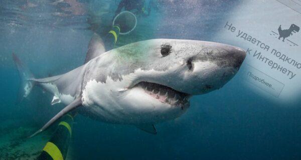Интернет приходится защищать от… нападений акул
