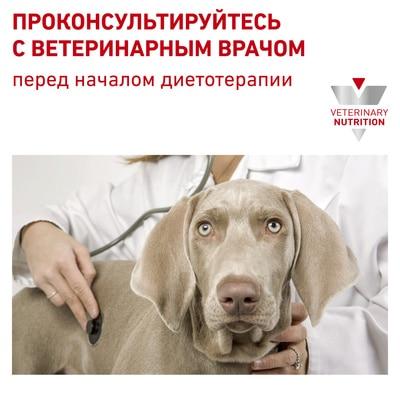 Качественные ветеринарные корма для собак