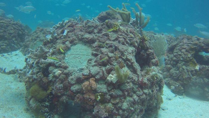 Bigpicture ru eternal reefs