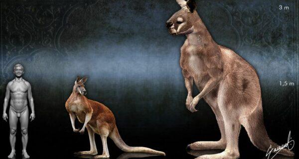 Копытный кенгуру прокоптодон – вымерший гигант Австралии