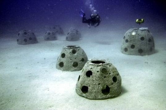 Bigpicture ru reef ball on sea floor e13727018